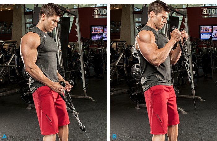 Standing Biceps Cable Curl Exercise