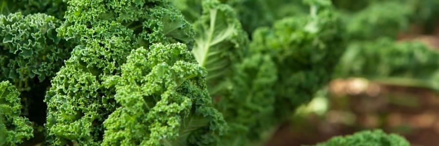 kale for testosterone