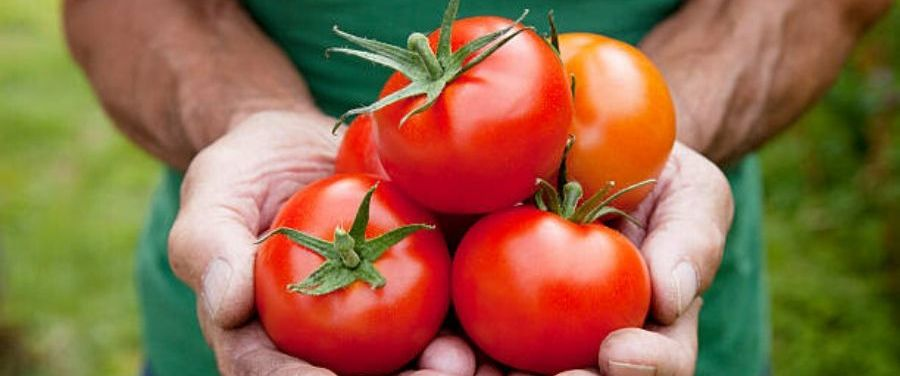 tomatoes to avoid depression and anxiety
