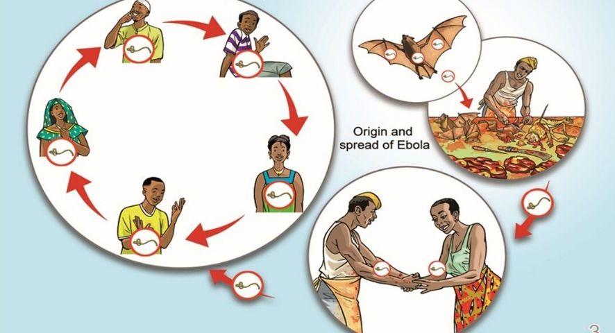 Ebola Virus Transmission