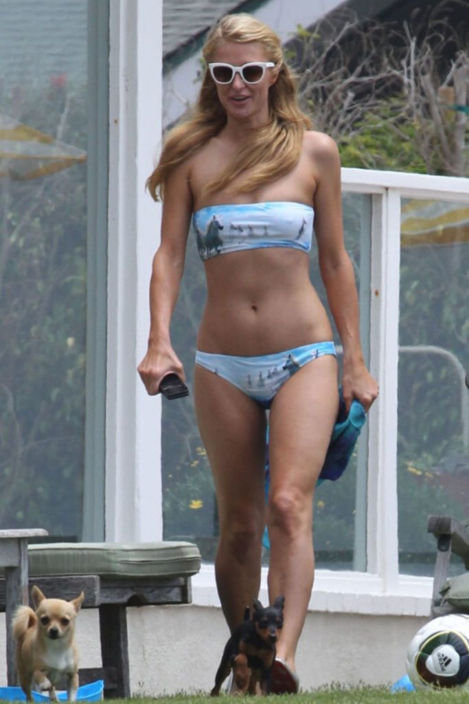 Paris Hilton Dog