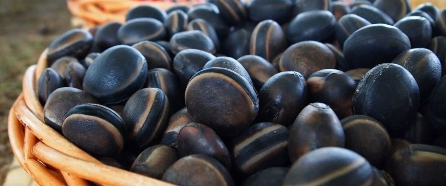 Mucuna Pruriens Benefits