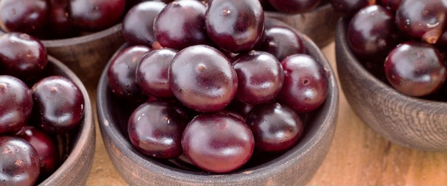 Fresh Acai Berries Kept in Bowl