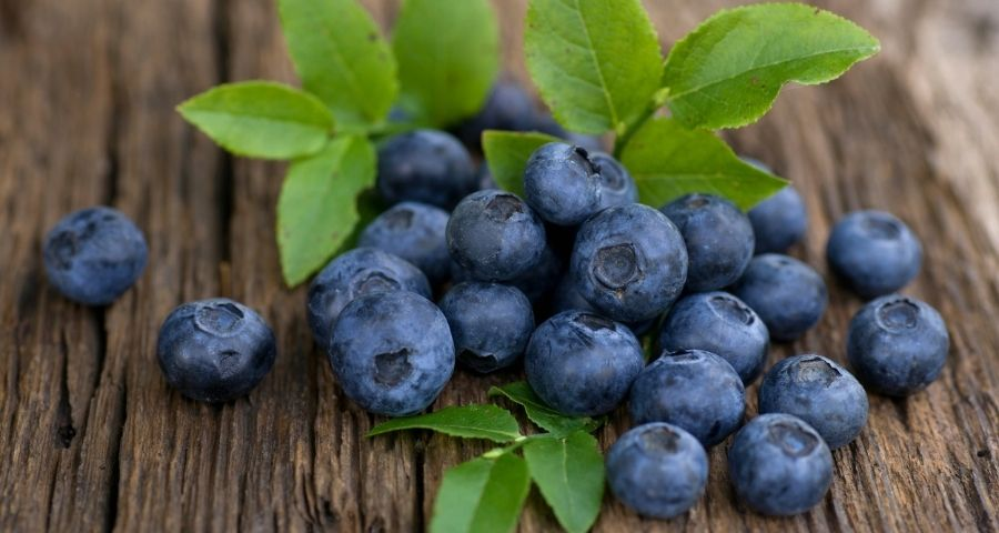 Fresh Bilberry Fruit with Leaves
