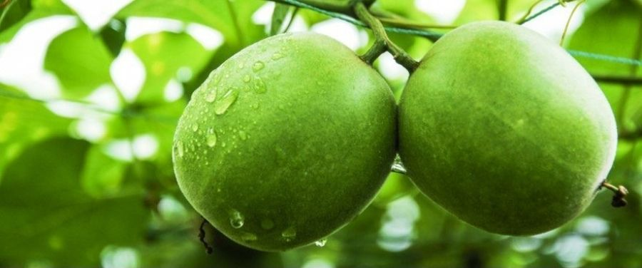 Monk Fruit