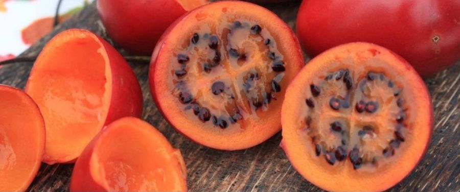 13 Incredible Health Benefits of Tamarillo (Tree Tomato)
