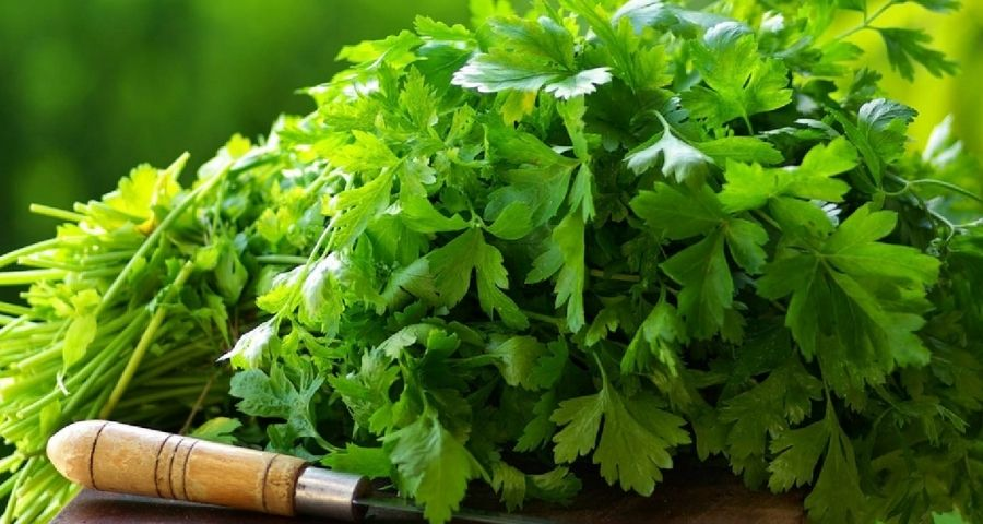 Coriander Water for Weight Loss